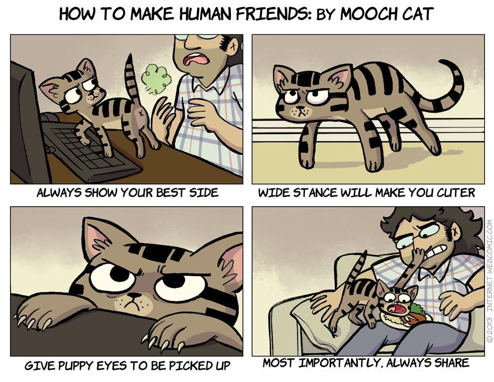 Cat Tips